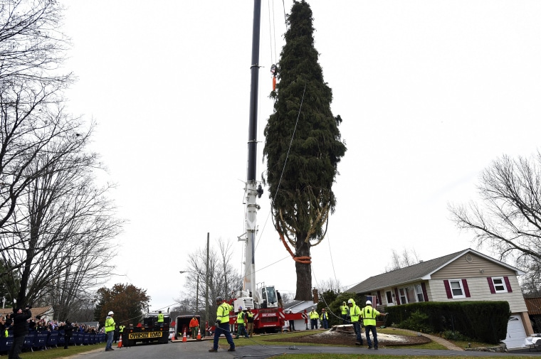 Image: This year's Rockefeller Center Christmas tree, a 77-foot tall, 12-ton Norway Spruce, is lifted onto a flatbed truck after being cut in Florida, N.Y., on Nov. 7, 2019.