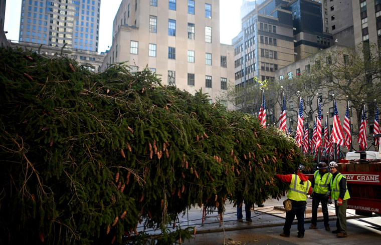 Image: Workers begin to raise the tree at Rockefeller Center in New York on Nov. 9, 2019.