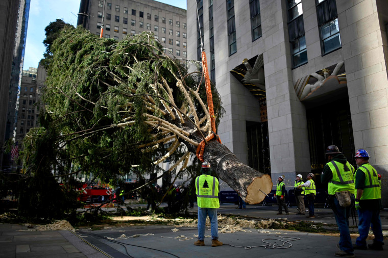 Image: Workers begin to raise the Rockefeller Center Christmas tree on Nov. 9, 2019.