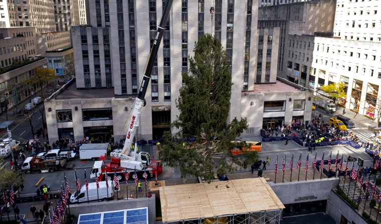 Image: This year's Rockefeller Center Christmas tree, a 77-foot tall, 12-ton Norway Spruce, is set on the platform on Nov. 9, 2019.