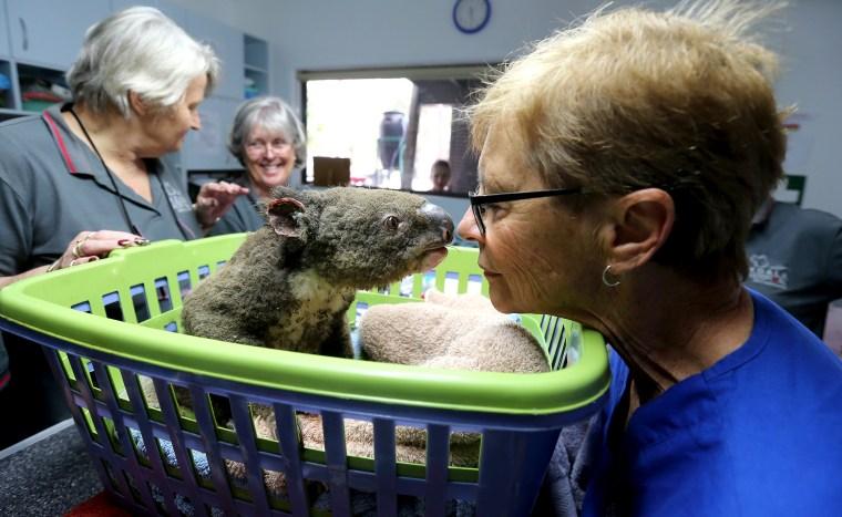 Image: Koala Hospital Works To Save Injured Animals Following Bushfires Across Eastern Australia