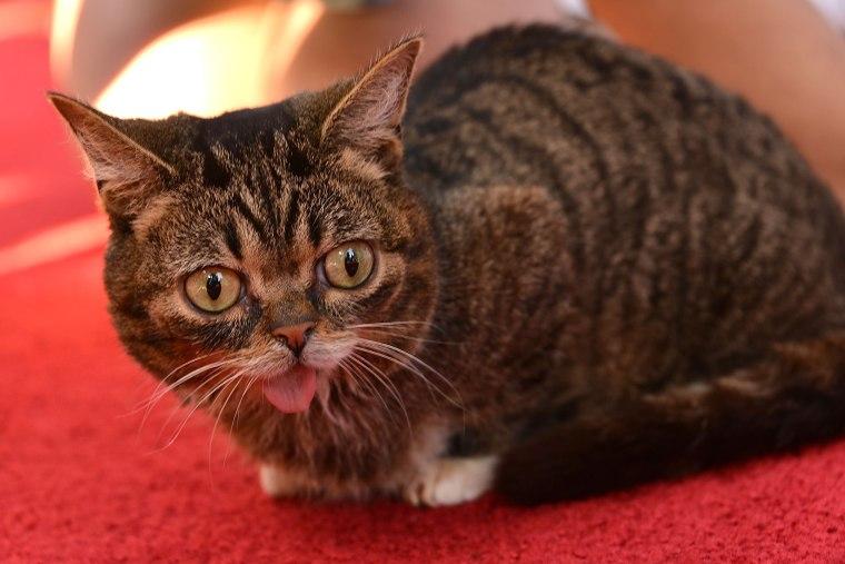 Image: Lil Bub