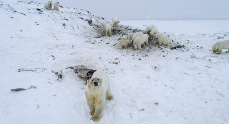 Image: TOPSHOT-RUSSIA-ANIMAL-CLIMATE