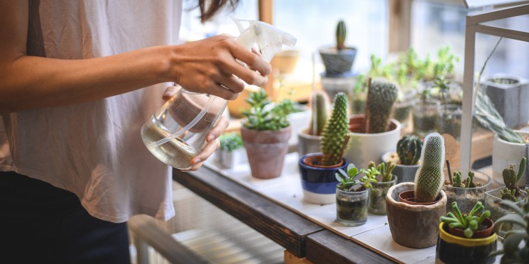 How To Grow Succulents 5 Tips To Care For Your Indoor Plants