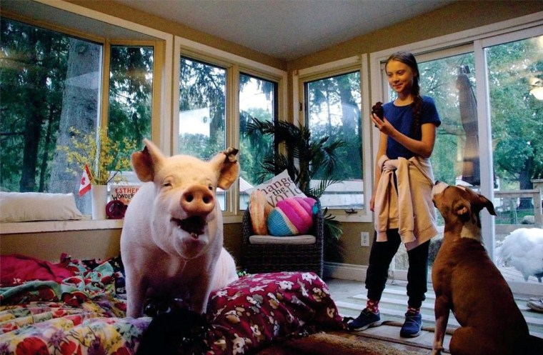 Image: Swedish environmental activist Greta Thunberg meets Esther the Wonder Pig during her visit to Esther's animal sanctuary in Campbellville, Ontario