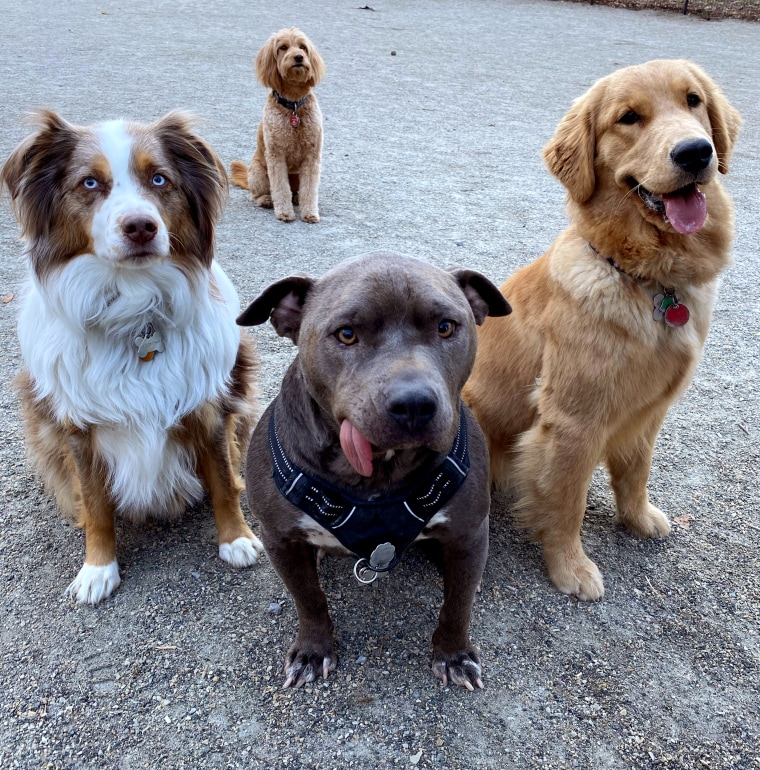 Image: Rowdy, left, and her friends, Gummy Bear and Goldie, at a dog park.