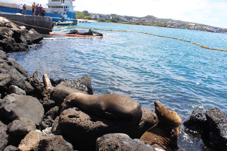 Image: Seals are seen at the site where a barge carrying 600 gallons of diesel sank at the La Predial dock of San Cristobal