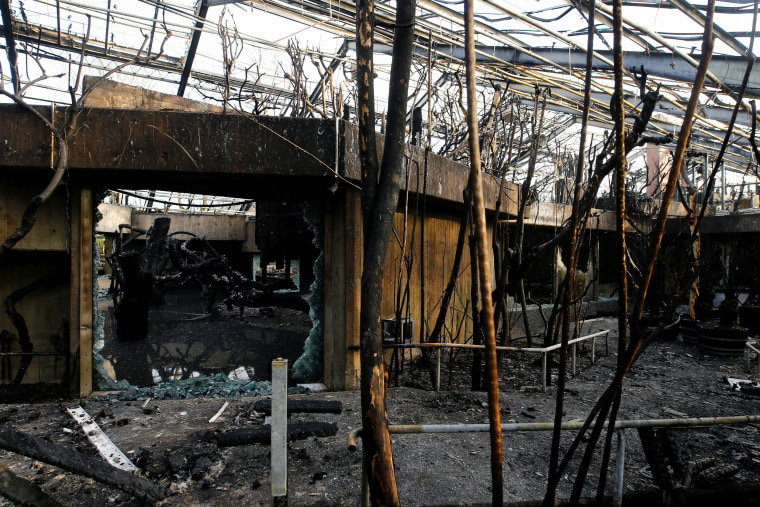 Image: The charred remains of the ape house at Krefeld Zoo on Jan. 1, 2020.