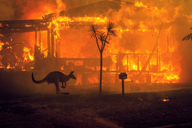 Image: A kangaroo rushes past a burning house in Lake Conjola, Australia, on Tuesday, Dec. 31 2019. (Matthew Abbott/The New York Times)