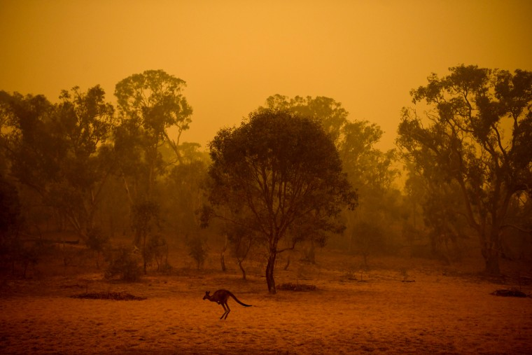 Image: A kangaroo is surrounded by hazy smoke in Canberra, Australia, on Jan. 5, 2020.