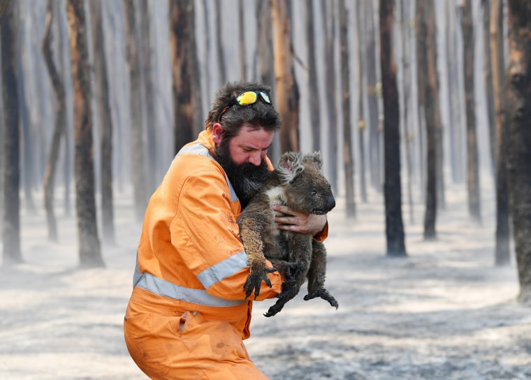 Wildlife rescuer Simon Adamczyk holds a rescued koala at a burning forest near Cape Borda on Kangaroo Island, southwest of Adelaide, Australia, on Jan. 7, 2020.
