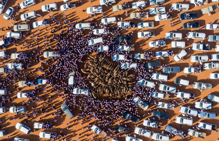 Cars surround camels for sale during the annual King Abdulaziz Camel Festival in Rumah, Saudi Arabia, on Jan. 7, 2020.