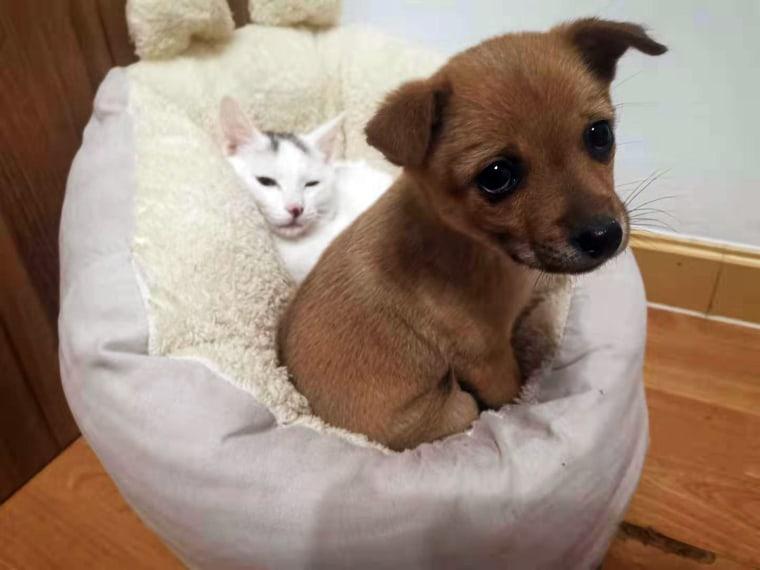 Image: Chen Yi's pets