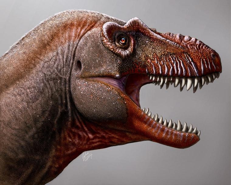 200210-tyrannosaurus-rex-cousin-2-se-335