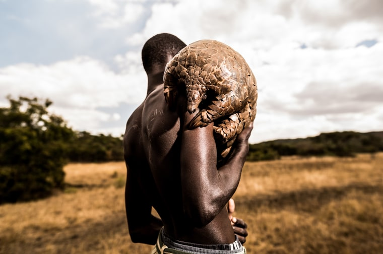 Coronavirus, pangolins and racism: Why conservationism and prejudice shouldn't mix