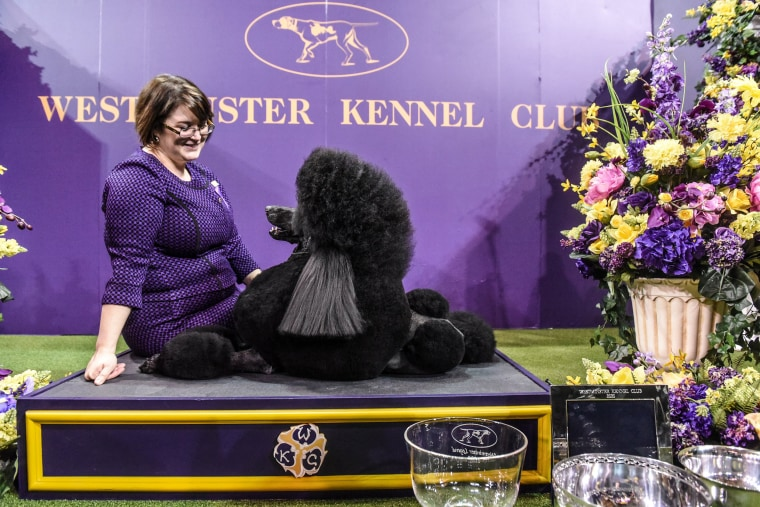 Image: Westminster Kennel Club Hosts Annual Dog Show In New York