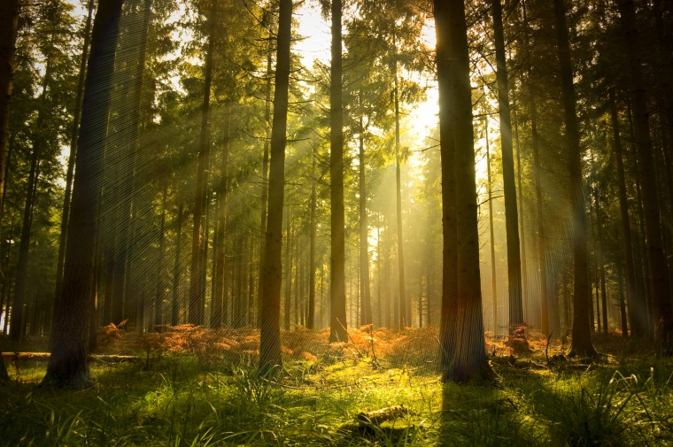 A beautiful forest at dusk.