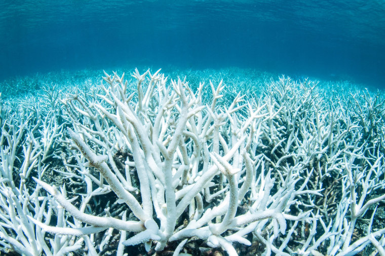 Image: Bleached coral on Australia's Great Barrier Reef near Port Douglas