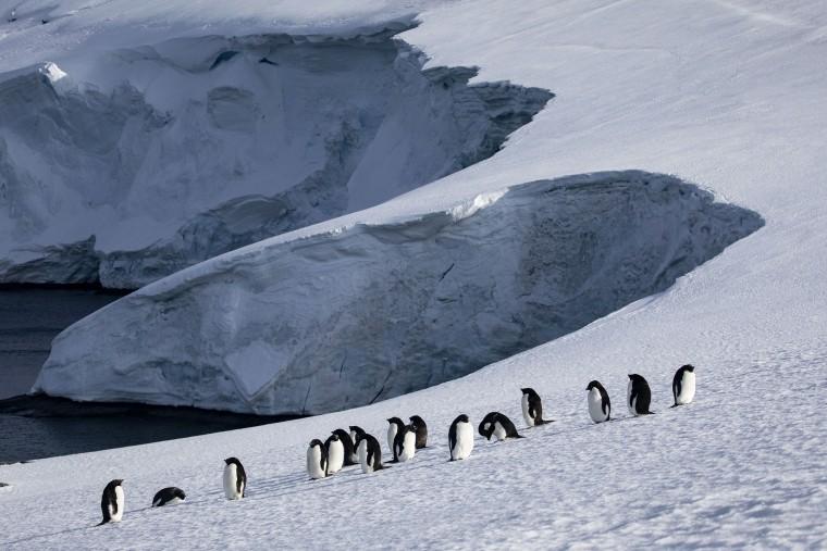 Image: Adelie penguins on Horseshoe Island in Antarctica in 2019.