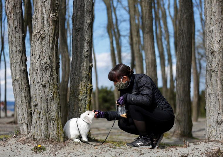 Image: Eaton feeds her rabbit Walter while wearing a mask at Golden Gardens Park during the coronavirus disease (COVID-19) outbreak in Seattle