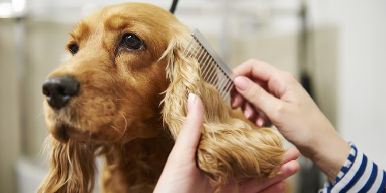 15 dog grooming tools to clean your pet at home