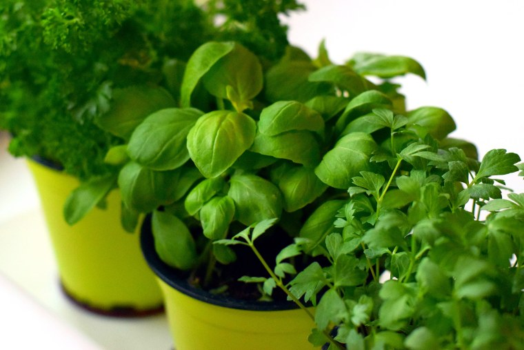 Get that indoor herb garden going (growing?).