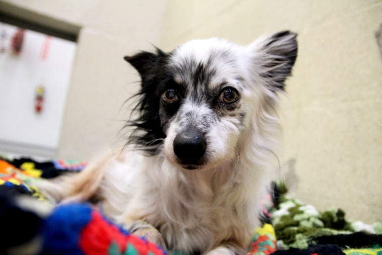 Romeo is available for adoption through the Atlanta Humane Society.
