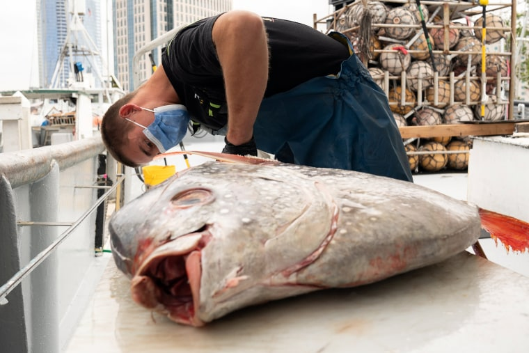 Image: Fish delivery goes door to door during the coronavirus disease outbreak