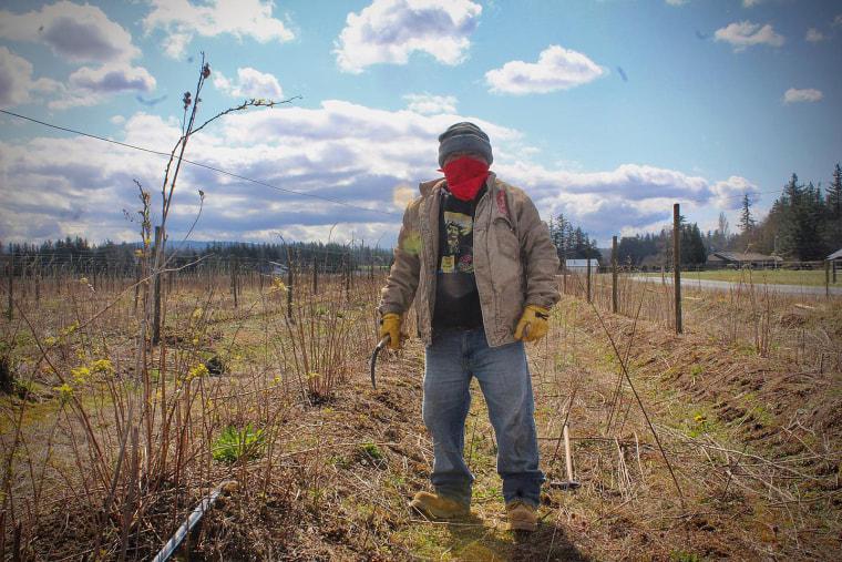A farmworker tends to fields in Skagit County, Washington.