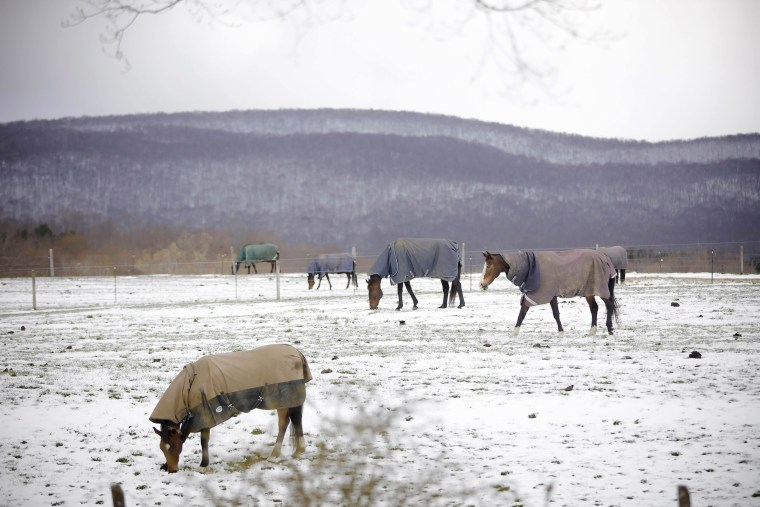 Image: At Wedgewood Stables in Lanesborough, Mass., horses graze the pasture with their coats on after a cold and snowy night on Saturday,
