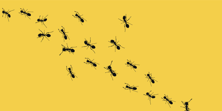 Image: Trail of ants on a yellow background