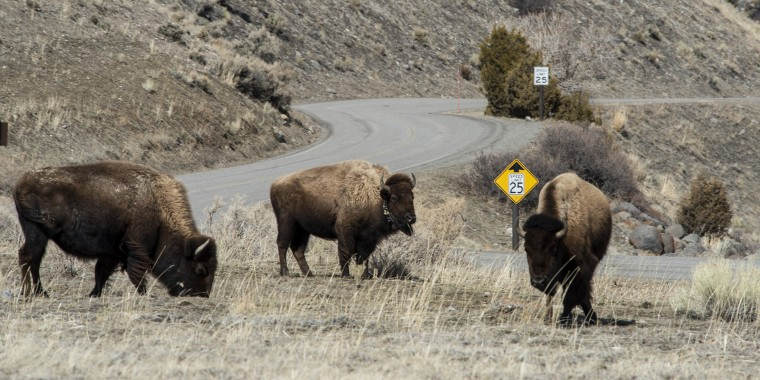 Yellowstone National Park Closed to Visitors