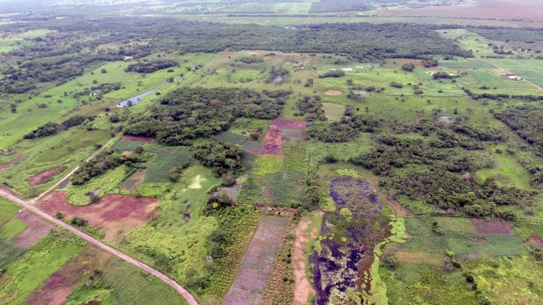 An aerial view of the Aguada Fenix site. The hidden Mayan platform, at the top of this photograph, is so large that it cannot be seen at ground level.