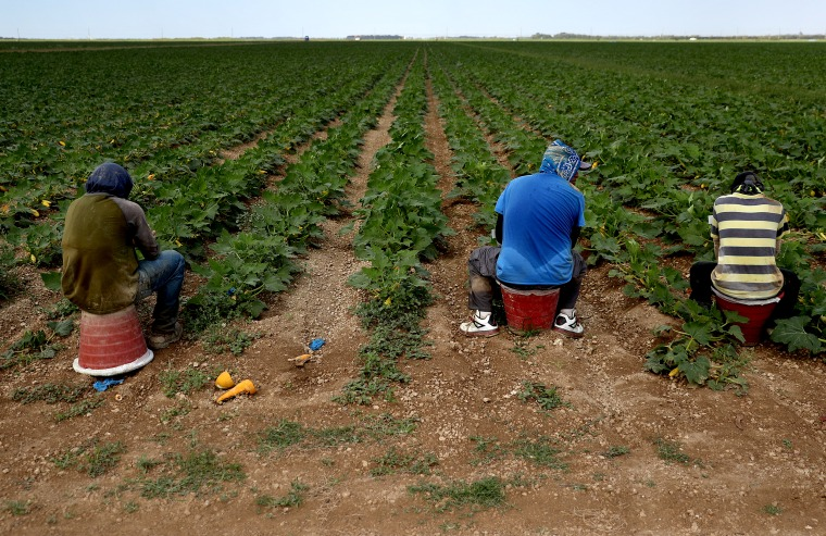 IMAGE: Farmworkers in Florida