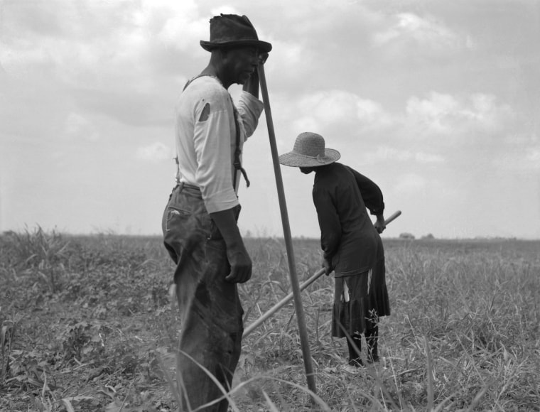 Image: Cotton sharecroppers