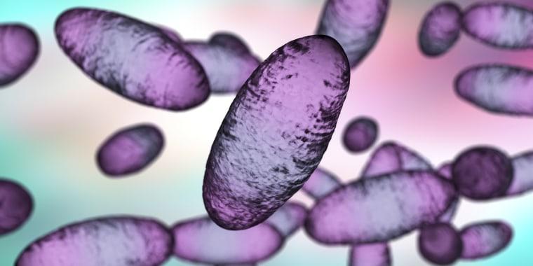 Plague bacteria Yersinia pestis, illustration