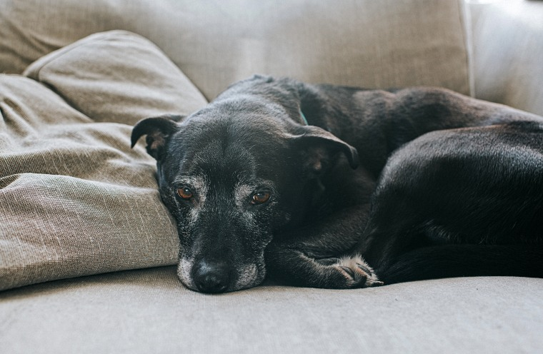 Image: Elderly Dog