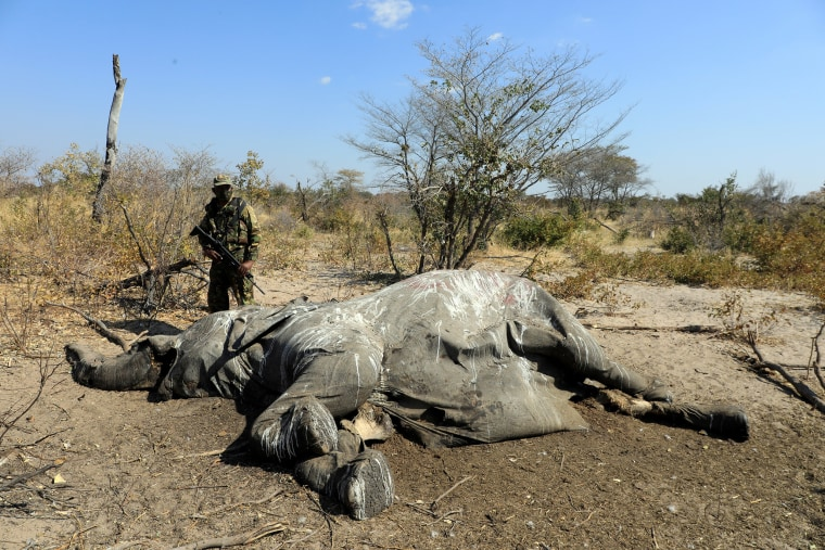 Image: A member of the Botswana Defence Force Anti Poaching Unit stands over the carcass of an elephant found near Seronga, in the Okavango Delta