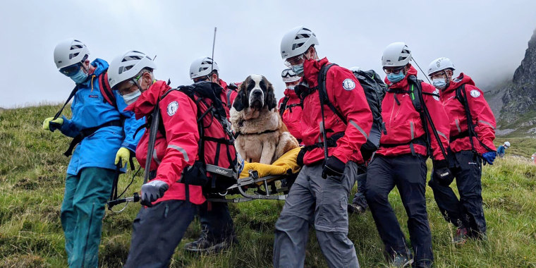 Sixteen volunteers from Wasdale mountain rescue team take turns to carry 121lb St Bernard dog, Daisy from England's highest peak, Scafell Pike, on July 26, 2020. The mountain rescue team spent nearly five hours rescuing St Bernard dog Daisy, who had collapsed displaying signs of pain in her rear legs and was refusing to move, while descending Scafell Pike.