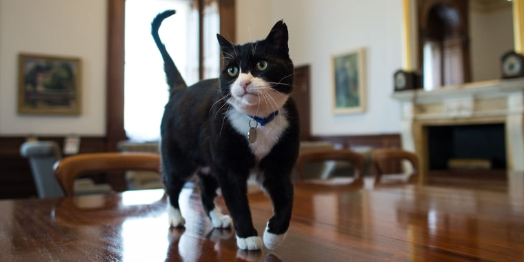 Image: Chief Mouser at Foreign Office