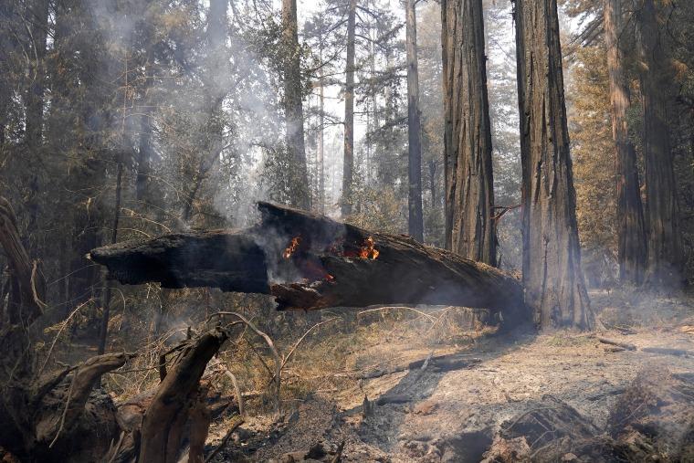 Image: Big Basin Redwoods
