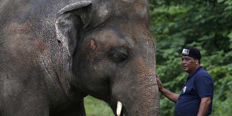 Pakistan elephant nicknamed 'world's loneliest elephant'