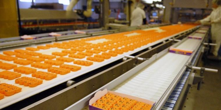 Marshmallow candy Peeps pumpkins move down a conveyor belt t