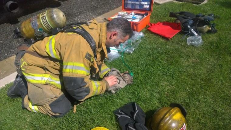Um bombeiro usa uma máscara de oxigênio para animais de estimação em um cachorro.