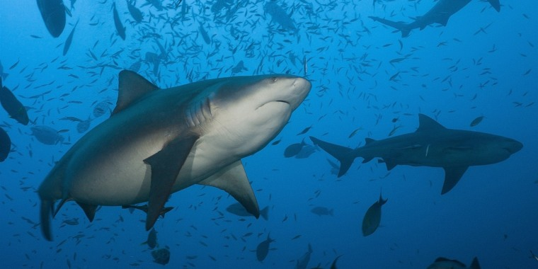 """Upon """"immediately after entering the water"""" Sunday morning, Andrew Eddy was attacked by a shark. As of Tuesday afternoon, his condition was not immediately clear, but Eddy sustained a """"severe"""" injury to his shoulder."""