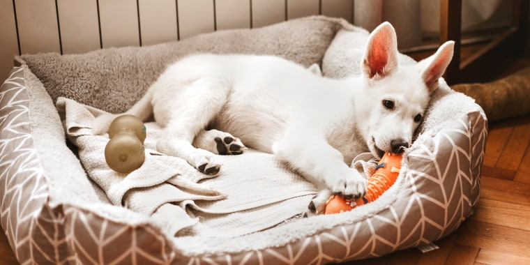 dog lying in dog bed with toy