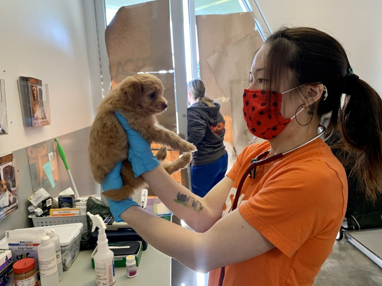 A puppy gets loving care at an animal clinic.