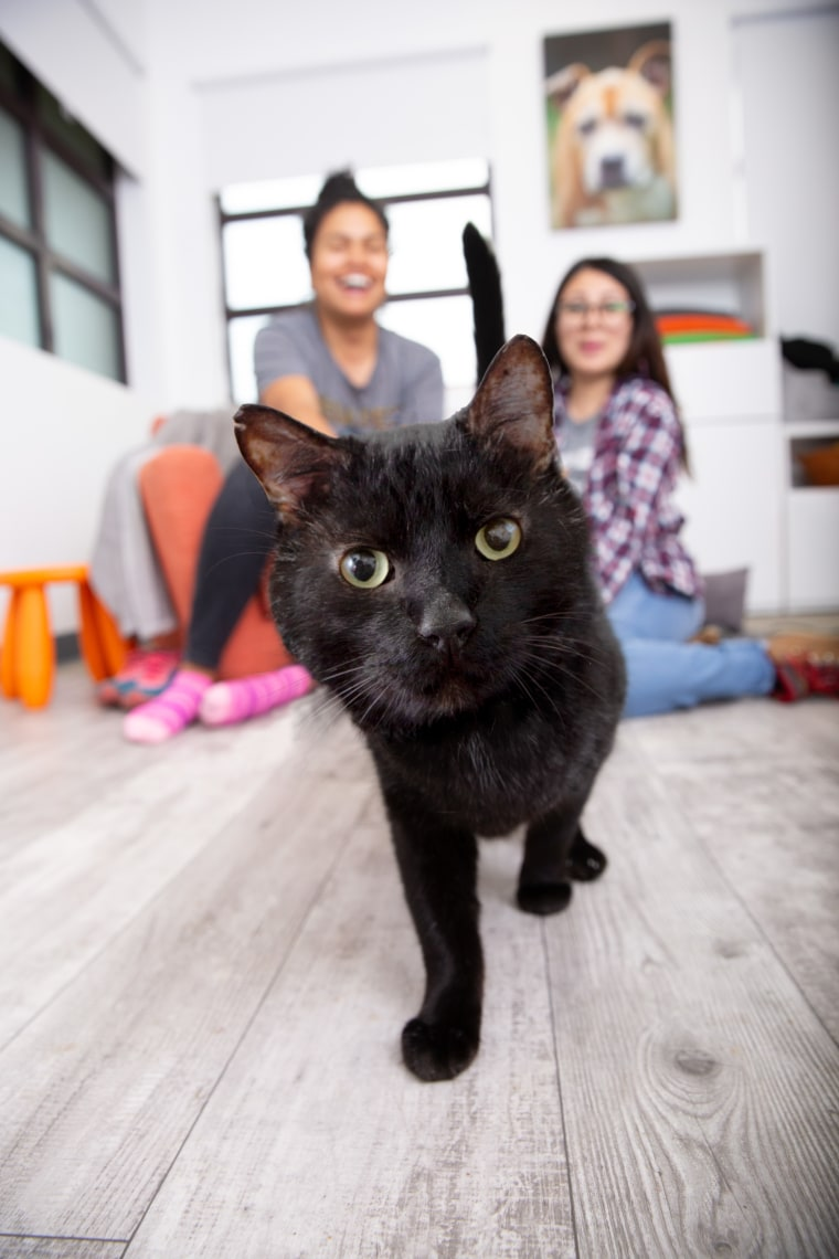 A black cat runs toward the camera.