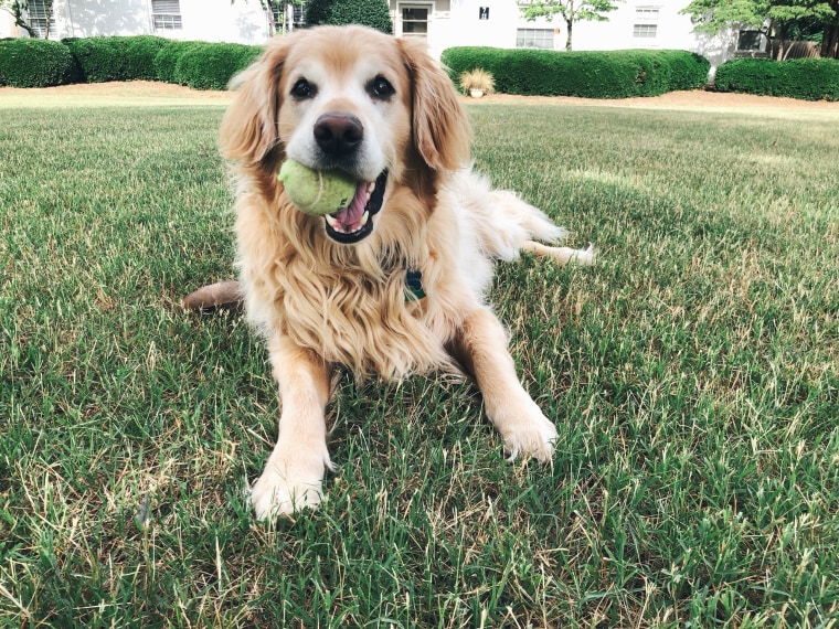 A loving obituary written for a golden retriever has captured the hearts of many.