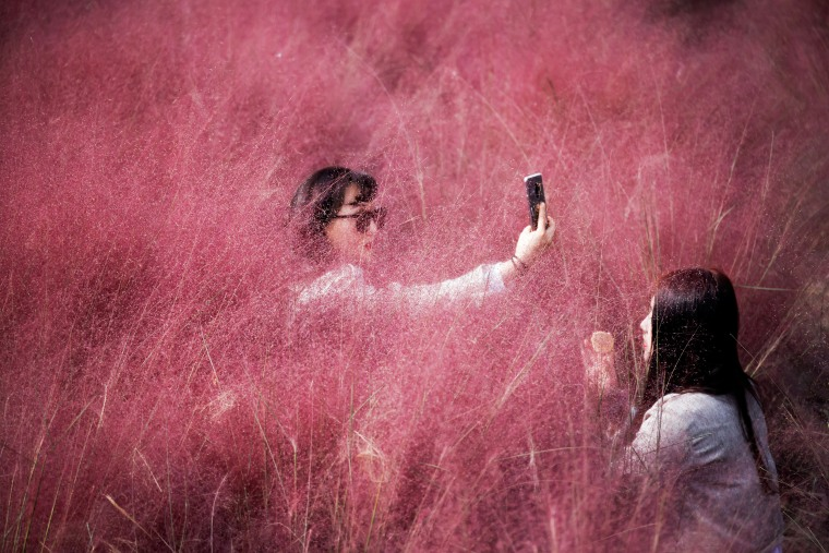 Image: A woman takes a selfie as her friend adjusts her makeup in a pink muhly grass field in Hanam